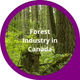 Button Forest Industry in Canada